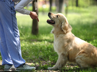 When Should A Service Dog Know Basic Obedience